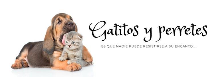 Gatitos perretes